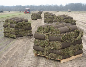 A wide selection of sod